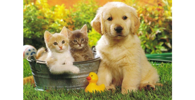 Kids Learn Life and Death from Pets