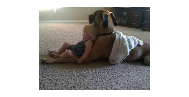 Dogs Protect Our Children