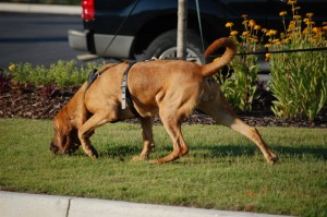Scent Acuity of Dogs – Another Reason Kids Need Dogs