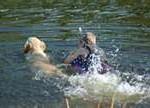 boy and dog golden swim