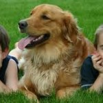 The Humanization of Pets