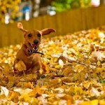 Fall Brings Changes for Everyone, Including Pets
