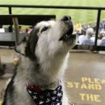 Bark in the Park Days at the Ball Parks