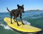 Best Summer Activities for Kids & Pets