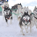 2015 Iditarod Race NOT Off to A Good Start!