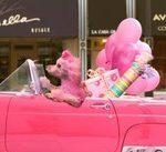 Poodle Parades & Dog Parades