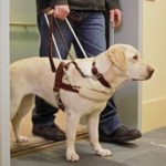 Today is National Seeing Eye Dog Day