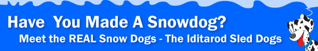Meet the REAL Snow Dogs – The Iditarod Sled Dogs